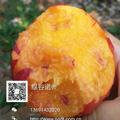 黄油桃礼品桃12只装